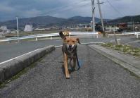 散歩20120324-2