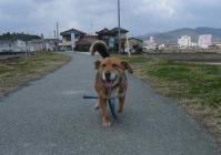 散歩20120324-3