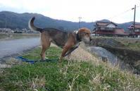 散歩20120324-4