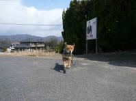 散歩20120325-2