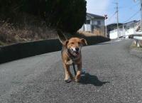 散歩20120325-3