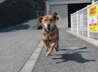 散歩20120325-4
