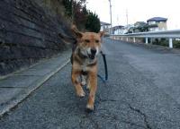 散歩20120326-2