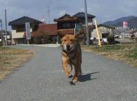 散歩20120326-3