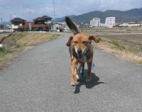 散歩20120326-4