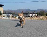 散歩20120327-1