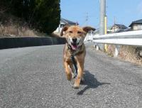 散歩20120327-2