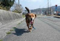 散歩20120327-5