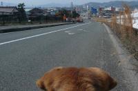 散歩20120328-1
