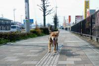 散歩20120328-3
