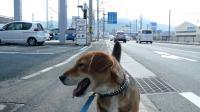 散歩20120328-4