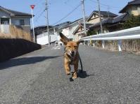 散歩20120329-1