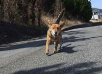 散歩20120329-2