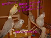 image130.jpg