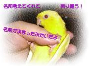 image142.jpg