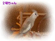 image144.jpg