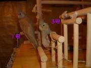 image162.jpg