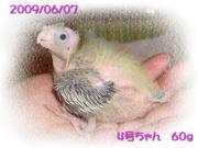 image66.jpg