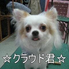 IMG_6362.jpg
