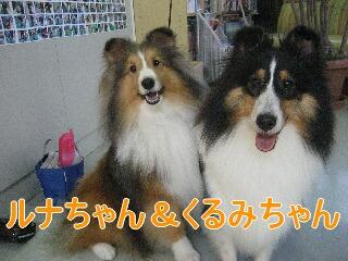 ルナ&くるみ