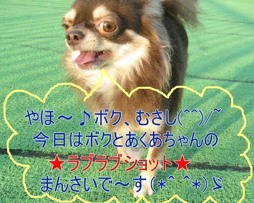 IMG_8192_20081215111102.jpg