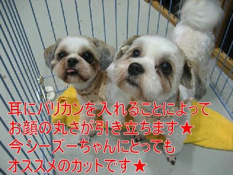 IMG_9365.jpg