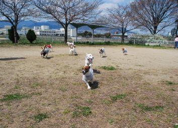09-03-29 お花見&カイリ 076