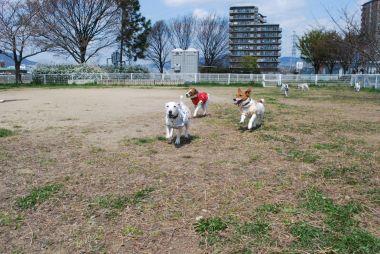 09-03-29 お花見&カイリ 080