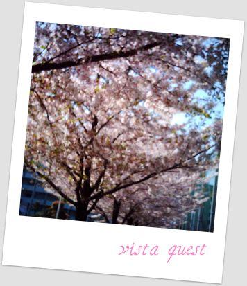 トイカメラ桜 002