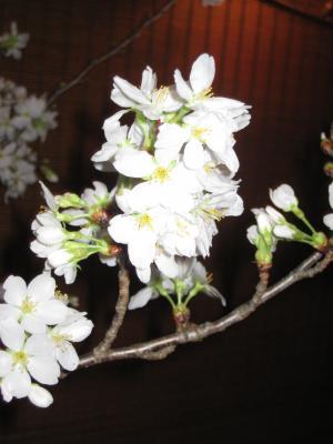 2012 桜