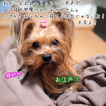008_20110106184242.jpg