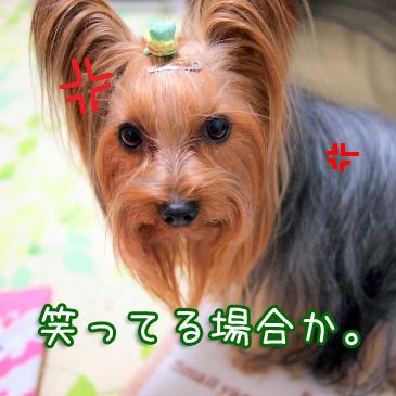1_20110111184503.jpg