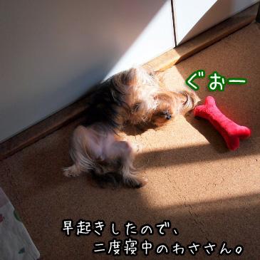 1_20110112193834.jpg