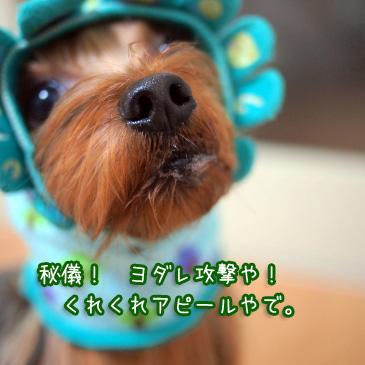 1_20110113192707.jpg
