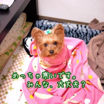 1_20110117155758.jpg