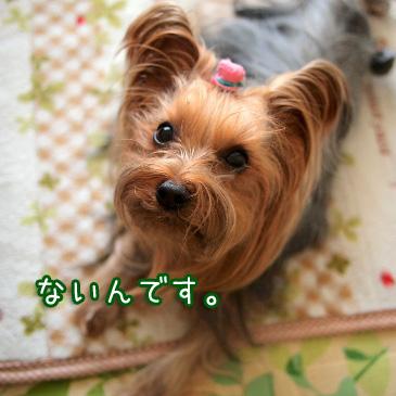 1_20110207150104.jpg
