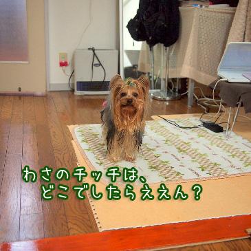 1_20110209193438.jpg