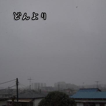 1_20110211194641.jpg
