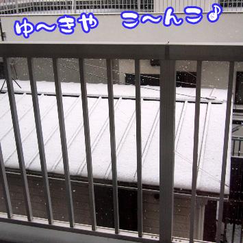 1_20110307194627.jpg
