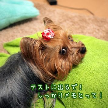 1_20110329181153.jpg