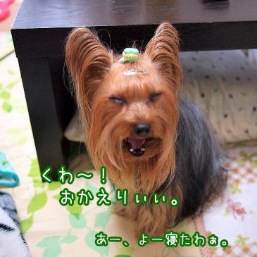 2_20110110172234.jpg