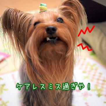 2_20110111184503.jpg