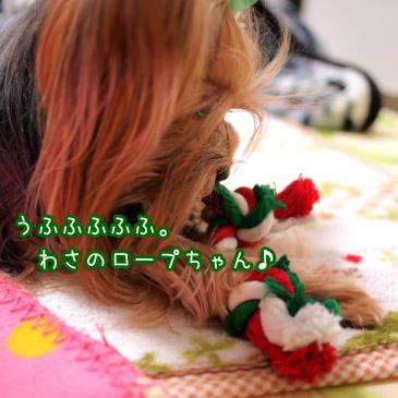 2_20110113192707.jpg