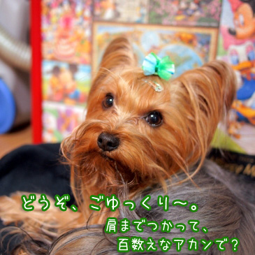 2_20110114194121.jpg