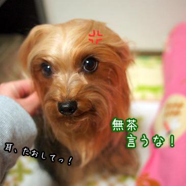 2_20110118200352.jpg