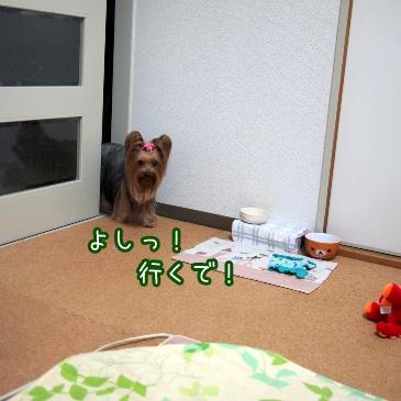 2_20110129192636.jpg