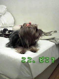 2_20110207150104.jpg