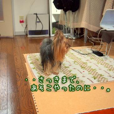 2_20110209193438.jpg