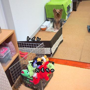 2_20110210161710.jpg