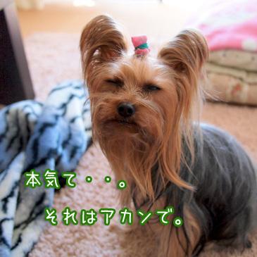 2_20110213190610.jpg